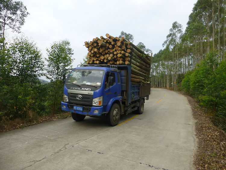 Photo: Timber transported from a woodlot in the hills of Zhangpu County, Fujian. Credit: Wikimedia Commons.